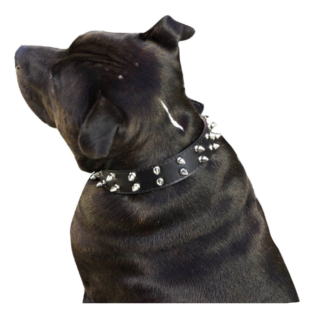 thumbnail 10 - Large-Dog-Collar-Black-Studded-S-M-Leather-Narrow-3cm-Staffy-Stud-Spiked-Spike