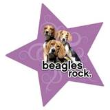Beagle Dog  Magnet Purple Star